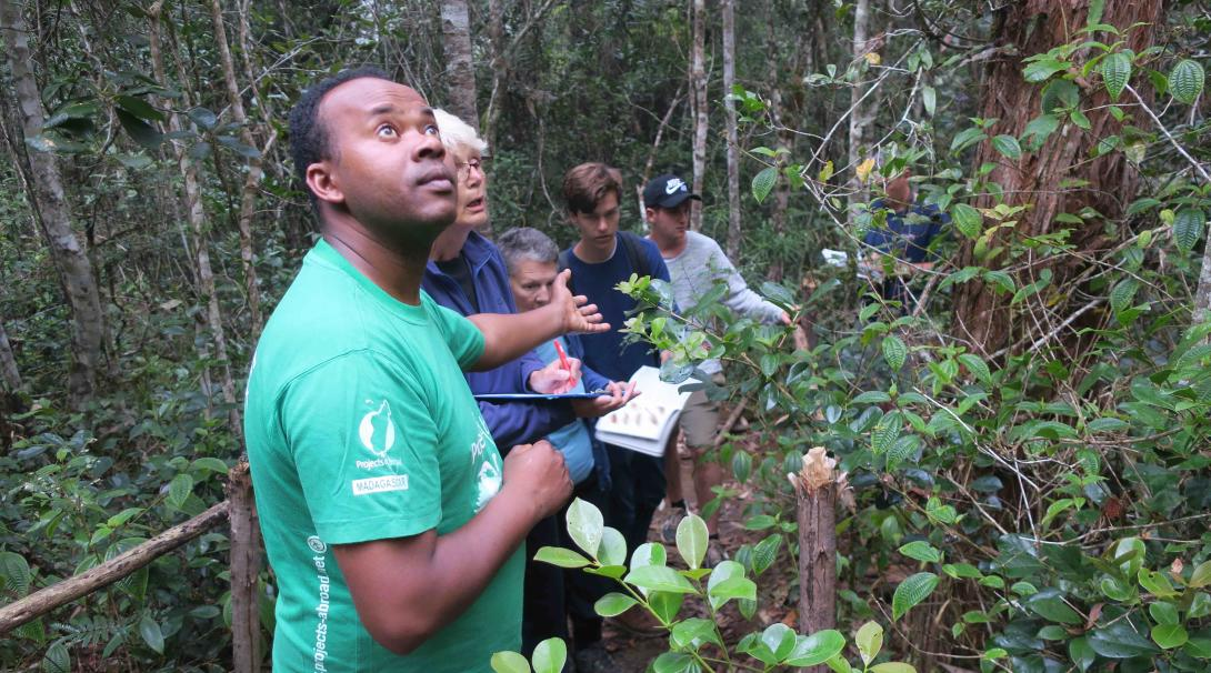 A group of Conservation volunteers search for lemurs and other animal species in the jungle in Madagascar during their project with Projects Abroad.